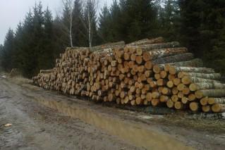 medienos ištraukimas